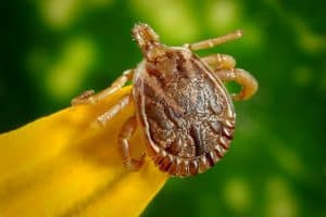 The State of Lyme Disease